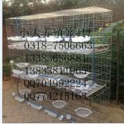 鹌鹑笼狐狸笼兔子笼鸽子笼鸡笼宠物笼运输笼鸭子笼鸡鸽兔笼貉子笼